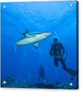 Gray Reef Shark With Divers, Papua New Acrylic Print by Steve Jones