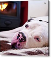 Great Dane Dog Sleeping By Fire Acrylic Print by Sharon Vos-Arnold