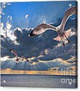 Greek Gulls With Sunbeams Acrylic Print by Meirion Matthias
