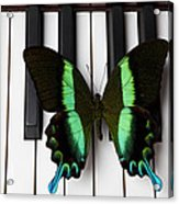 Green And Black Butterfly On Piano Keys Acrylic Print by Garry Gay