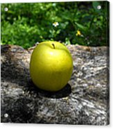 Green Apple Acrylic Print by David Lee Thompson