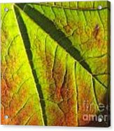 Green Days Past Acrylic Print by Trish Hale