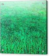 Green Grass Acrylic Print by Lolita Bronzini