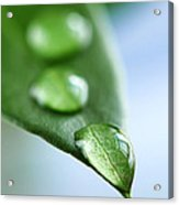 Green Leaf With Water Drops Acrylic Print by Elena Elisseeva
