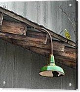 Green Light Acrylic Print by Brenda Bryant