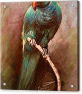 Green Parrot Acrylic Print by Ylli Haruni