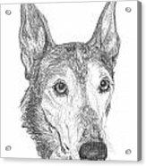 Greyhound Acrylic Print by Deb Gardner