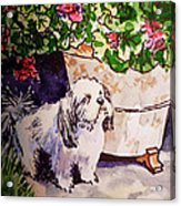 Guarding Geranium Sketchbook Project Down My Street Acrylic Print by Irina Sztukowski