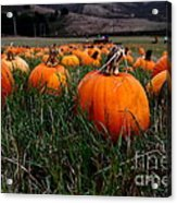 Halloween Pumpkin Patch 7d8405 Acrylic Print by Wingsdomain Art and Photography