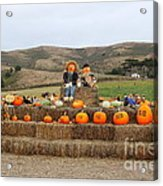 Halloween Pumpkin Patch 7d8478 Acrylic Print by Wingsdomain Art and Photography