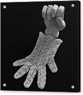Hand And Glove Acrylic Print by Barbara St Jean