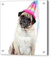 Happy Birthday Acrylic Print by Mlorenzphotography