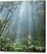 Hawaiian Rainforest Acrylic Print by Gregory Dimijian MD