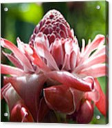 Hawiian Mystery Flower Acrylic Print by Chris Ann Wiggins