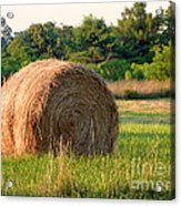 Haybale Acrylic Print by Louise Peardon