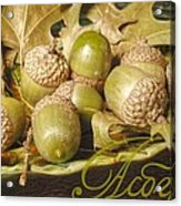 Hdr Green Acorns In A Dish Acrylic Print by Jennifer Holcombe