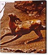 He Who Saved The Deer - Deer Detail Acrylic Print by Dawn Senior-Trask