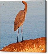 Heron On Palm Acrylic Print by David Lee Thompson