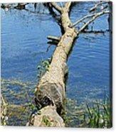 Herrick Lake Acrylic Print by Todd Sherlock