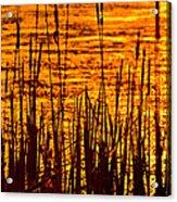 Horicon Cattail Marsh Wisconsin Acrylic Print by Steve Gadomski