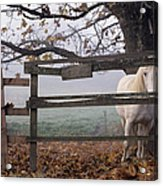 Horse At Fence Acrylic Print by Jim Corwin and Photo Researchers