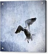 Hovering Seagull Acrylic Print by Carol Leigh