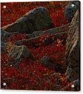 Huckleberry Bushes And Multi-hued Acrylic Print by Michael Melford