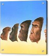 Human Evolution, Artwork Acrylic Print by Richard Bizley