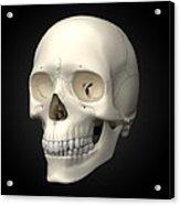 Human Skull, Artwork Acrylic Print by Visual Science