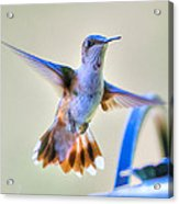 Hummingbird At The Feeder Acrylic Print by Shirley Tinkham