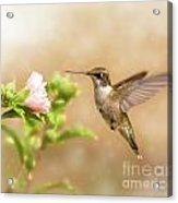 Hummingbird Hovering Acrylic Print by Sari ONeal
