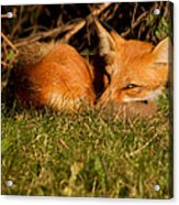 I Can See You Acrylic Print by Mircea Costina Photography