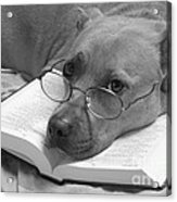 I Read My Bible Every Day . Bw Acrylic Print by Renee Trenholm
