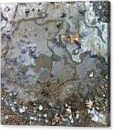 Ice On The Rocks Acrylic Print by Elijah Brook