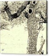 Ichabod Lane Acrylic Print by Joe Jake Pratt
