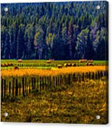 Idaho Hay Bales  Acrylic Print by David Patterson