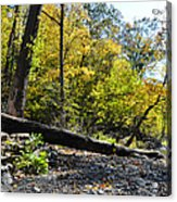 If A Tree Falls Acrylic Print by Bill Cannon