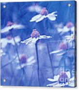 Imagine 06ht01 Acrylic Print by Variance Collections
