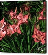In The Pink Acrylic Print by Tom Prendergast