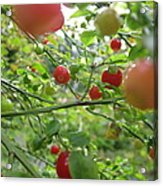 Inside The Red Huckleberry Acrylic Print by Kym Backland