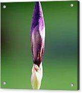 Iris 12 Acrylic Print by Nathan Larson