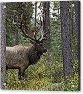 Jasper National Park, Jasper, Alberta Acrylic Print by Philippe Widling