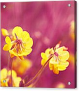 Joyfulness Acrylic Print by Aimelle