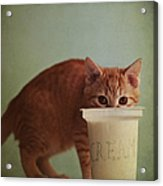 Kitten Eating From Big Pot Of  Cream Acrylic Print by By Julie Mcinnes