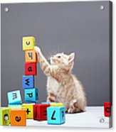 Kitten Playing With Building Blocks Acrylic Print by Martin Poole