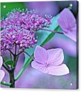 Lace Acrylic Print by Becky Lodes
