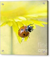 Lady In Yellow Acrylic Print by Jacky Parker