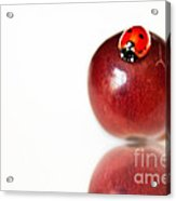Ladybug On Grape Acrylic Print by Artist and Photographer Laura Wrede