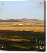 Landscape With Cows Grazing In The Field . 7d9966 Acrylic Print by Wingsdomain Art and Photography
