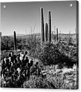 Late Winter Desert Acrylic Print by Chad Dutson
